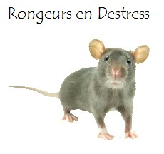 RED-rat