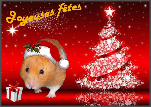 Noel des Hamsters
