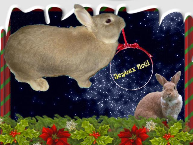 Noel des Lapins