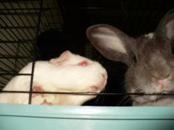 Vahiné et Merlin