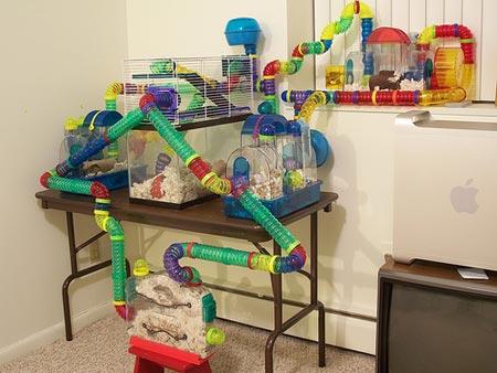 pages fiches rongeurs le hamster habitat du