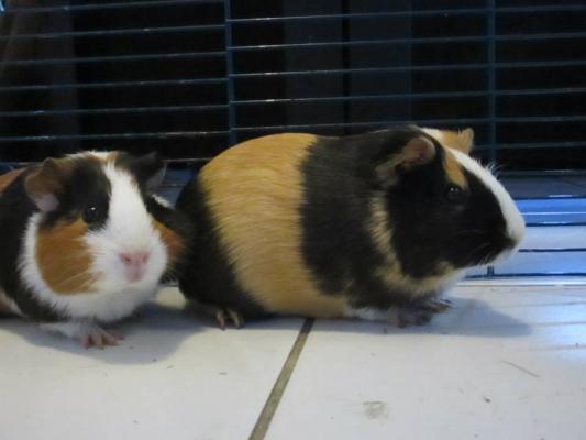 2 femelles ci