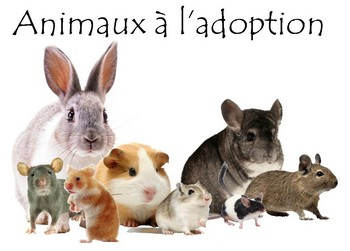 Animaux à l'adoption