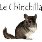 Bouton chinchilla 1