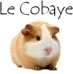 Bouton cobaye 1