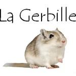Bouton gerbille 1