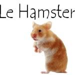 Bouton hamster 1