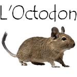 Bouton octodon 3