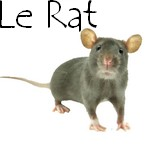 Bouton rat 2
