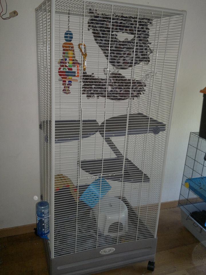 Cage kurenai