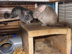 Celly et son nouveau copain