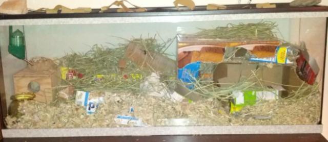 Habitat d une gerbille
