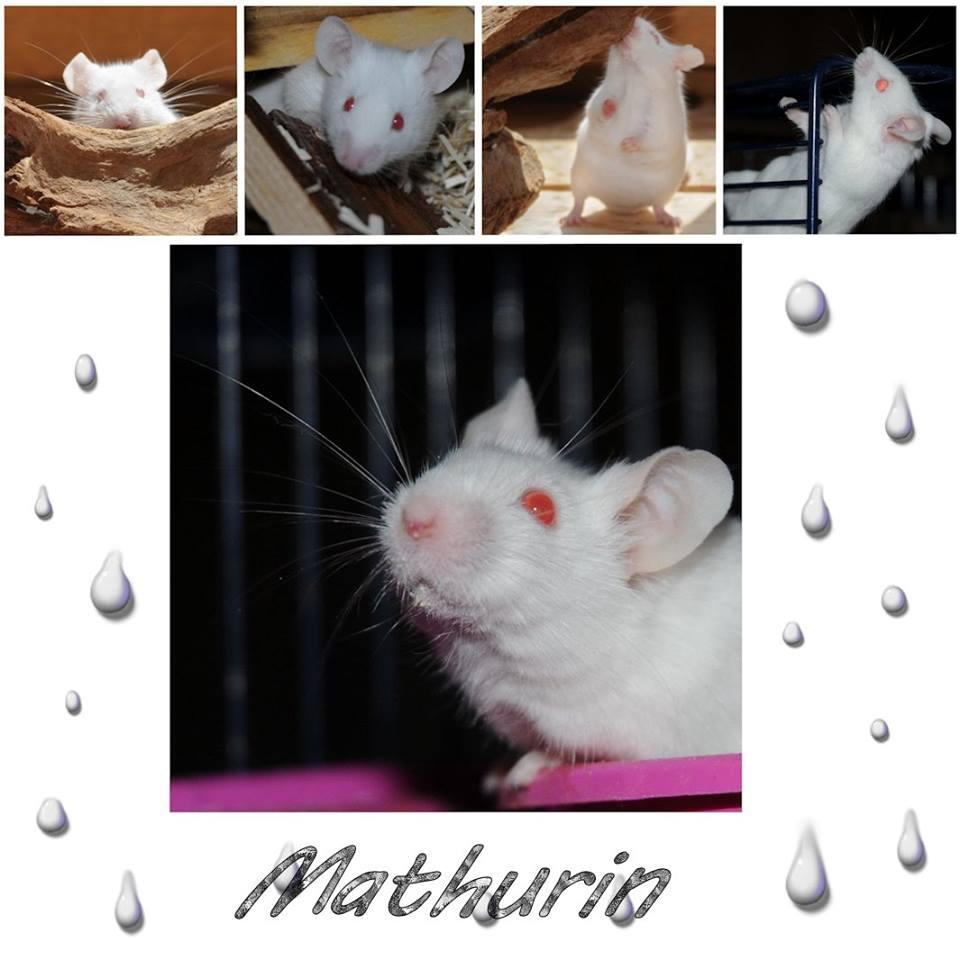 Mathurin 1