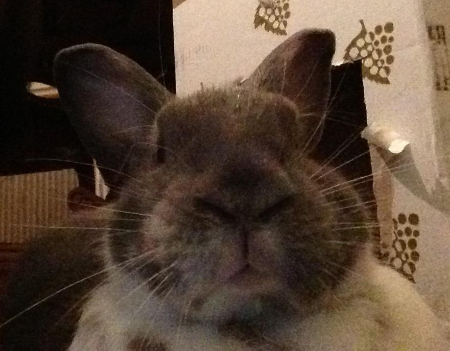 Merlin selfie