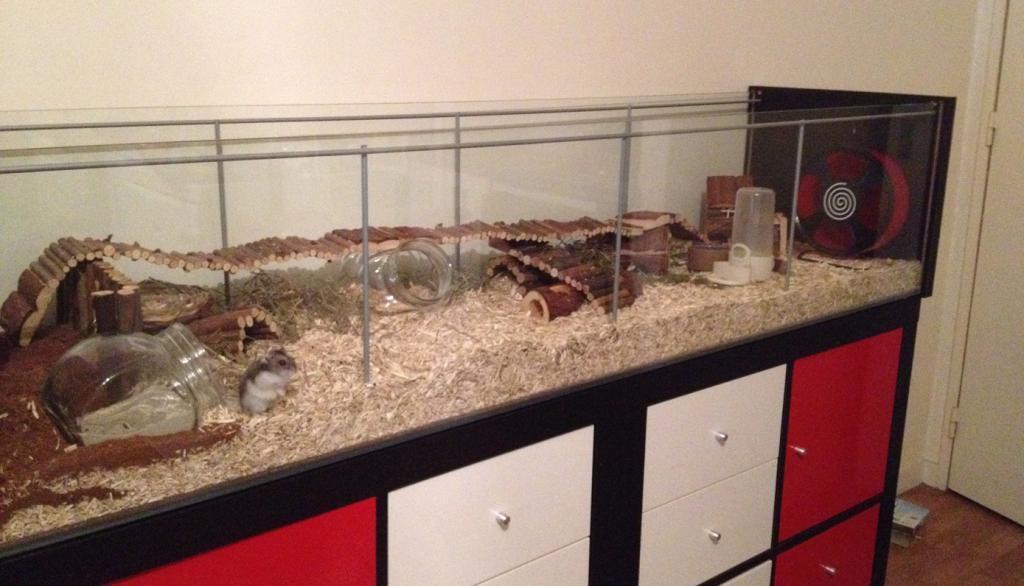 habitat du hamster. Black Bedroom Furniture Sets. Home Design Ideas